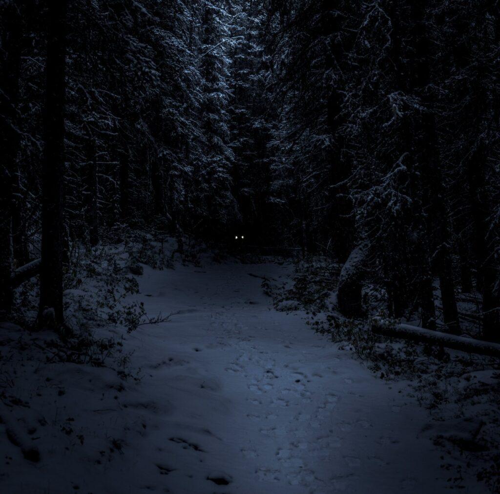 Mørk skov